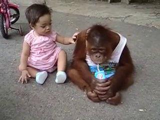 Leave ! This Is My Milk-Monkey Vs Cute Kid-Top Funny Videos-Top Prank Videos-Top Vines Videos-Viral Video-Funny Fails