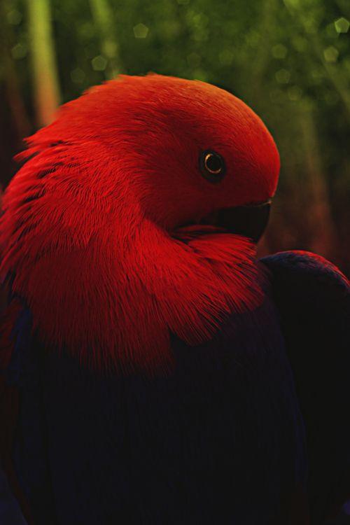 Parrot 105 78+ images abou...