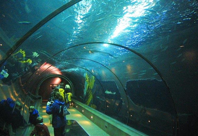 Oregon Coast Aquarium Newport Or Fav Places I 39 Ve Been