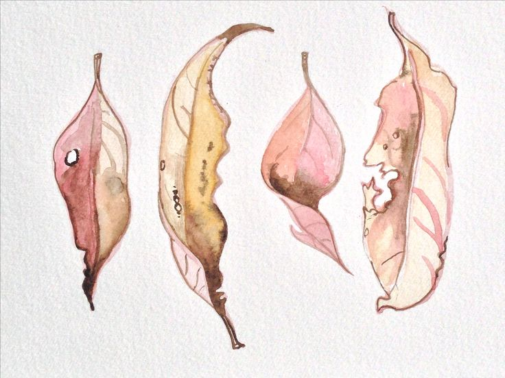 Lychee Leaves in watercolours by Anna Jackson.