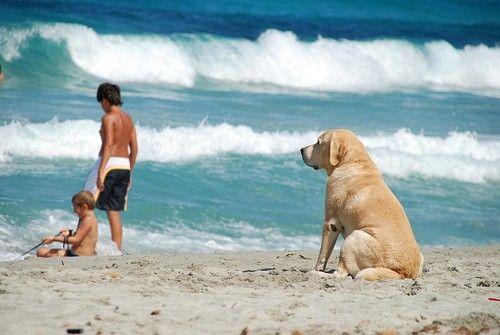 Playa Can de Gandia