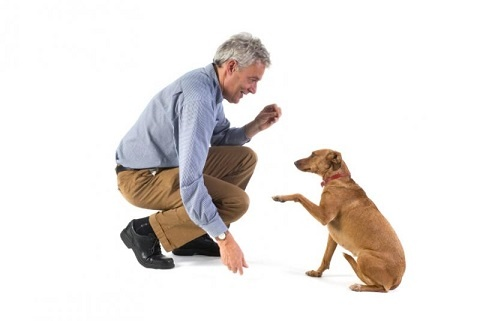 If you're taking in a puppy or dog and want to make certain that it is likely to listen and obey commands, you really want to make certain to start training at a very early age >> Dog Training Guide --> http://dogtraininguide.com