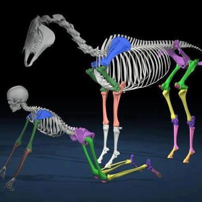 121 best skeletal system images on pinterest | human anatomy, Skeleton