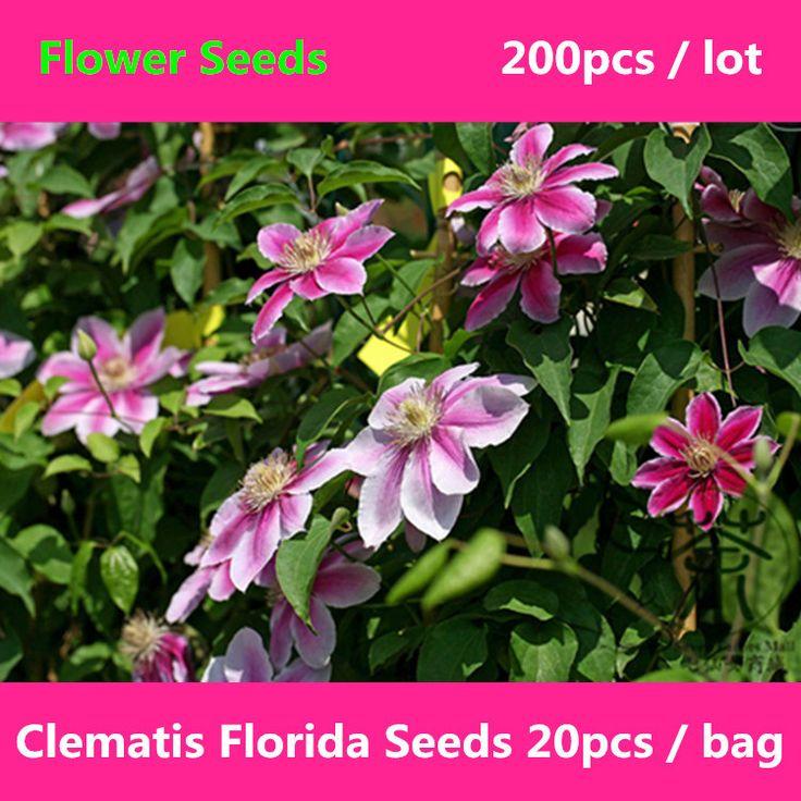 Цветущих растений семена клематиса флорида семена 200 шт., декоративное растение ломонос семена цветов, широко культивируется ломонос Hybridas семена