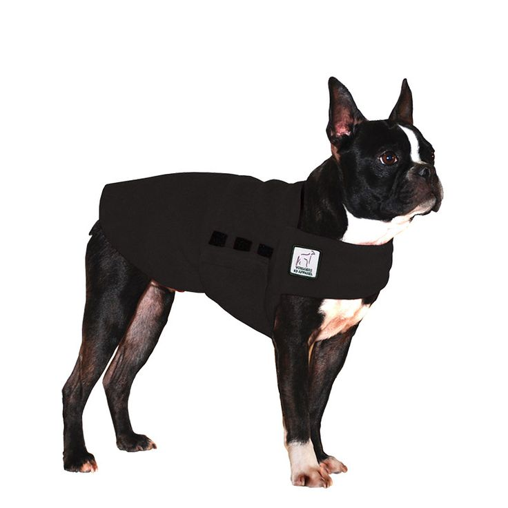 Black Boston Terrier Dog Tummy Warmer, great for warmth, anxiety and laying with our dog rain coat. High performance material. Made in the USA.