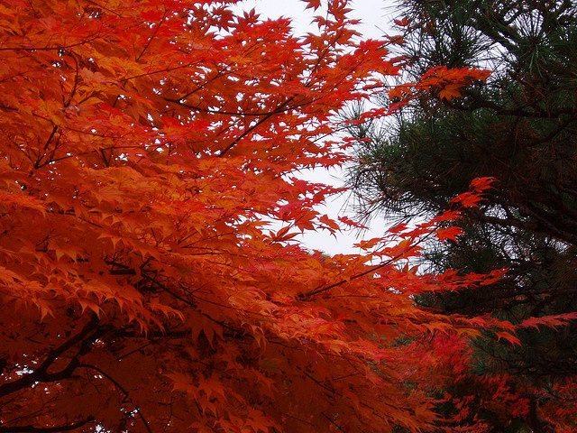 Autumn in Toyama #Japan