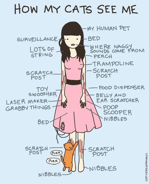 Cat versus Human,HUMOR Gráfico