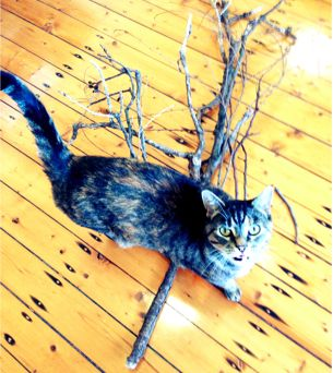 My kitty cat peaches was keen to help source the branches for my tree!