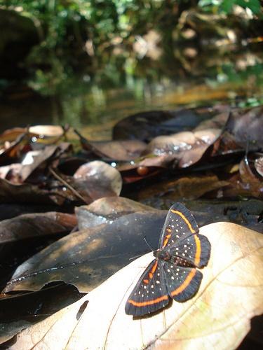 Borboleta by Flávio Eiró, Chapada dos Guimarães, Brazil via Flickr: Life, Butterflies Etc, Ladybugs Butterflies, Butterflies Insects, Beautiful Flowers, Chapada Dos