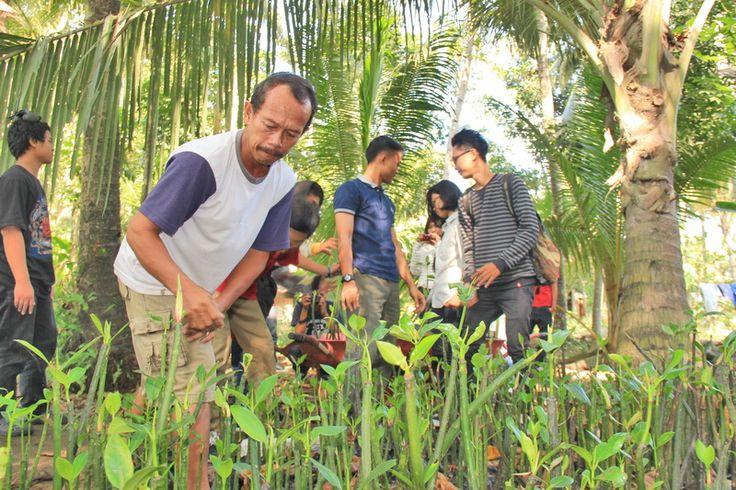"Kegiatan Penanaman bibit mangrove ini di adakan oleh teman-teman ""GUYUB LUDRUK CREW"" Venue : pasir mendit, Jangkaran,temon, kulonprogo DIY Minggu, 29 Juni 2014. Bibit : 280 batang Mangrove"