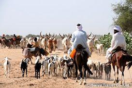 家畜を連れてチャド湖へ向かう