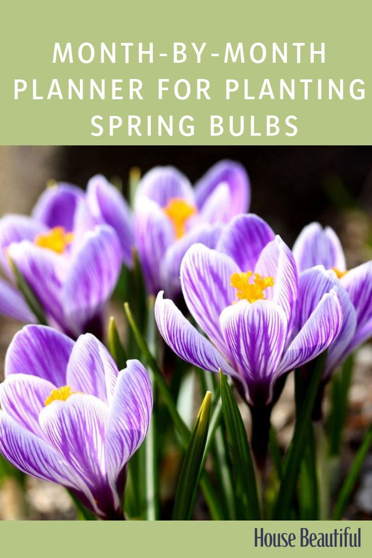 These Are The Best Flowering Bulbs To Plant Now For The Most Colourful Spring Garden Spring Flowering Bulbs When To Plant Bulbs Spring Bulbs Garden