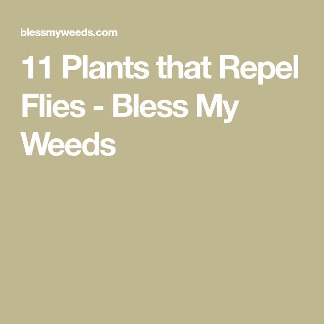 11 Plants that Repel Flies - Bless My Weeds