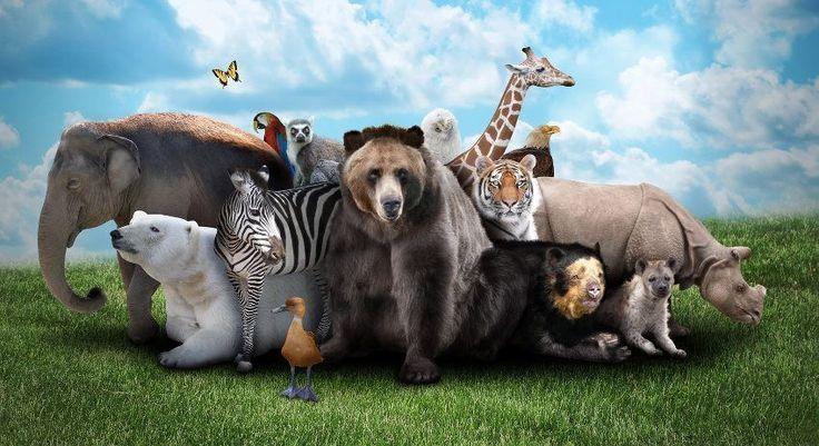 animales-salvajes-portada.jpg (850×464)