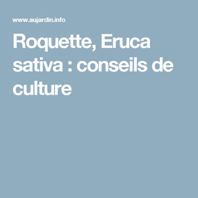 Roquette, Eruca sativa : conseils de culture