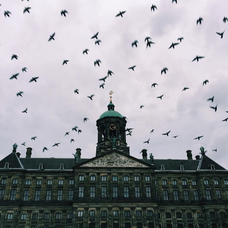 The birds were acting a bit crazy today  #cityhall #stadhuisplein #amsterdam #netherlands #travel #traveladdict #crazybirds #vsco #vscocam