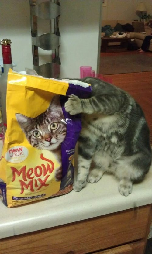 """Is anyone disturbed by this """"innocent"""" kitty!!?!"""