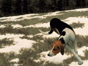 Hound in Field