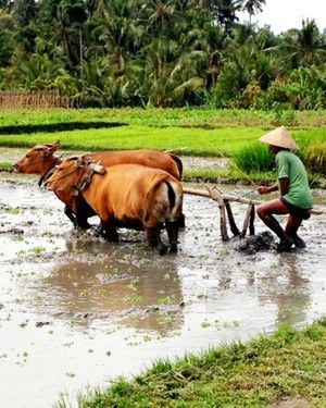 Rice Farmers   Heaven at the End of the World: Bali   FATHOM Travel Blog and Travel Guides
