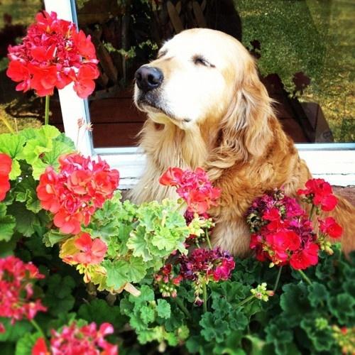 Dog Smell Clean Up: 17 Best Images About Dog Smells Flower On Pinterest