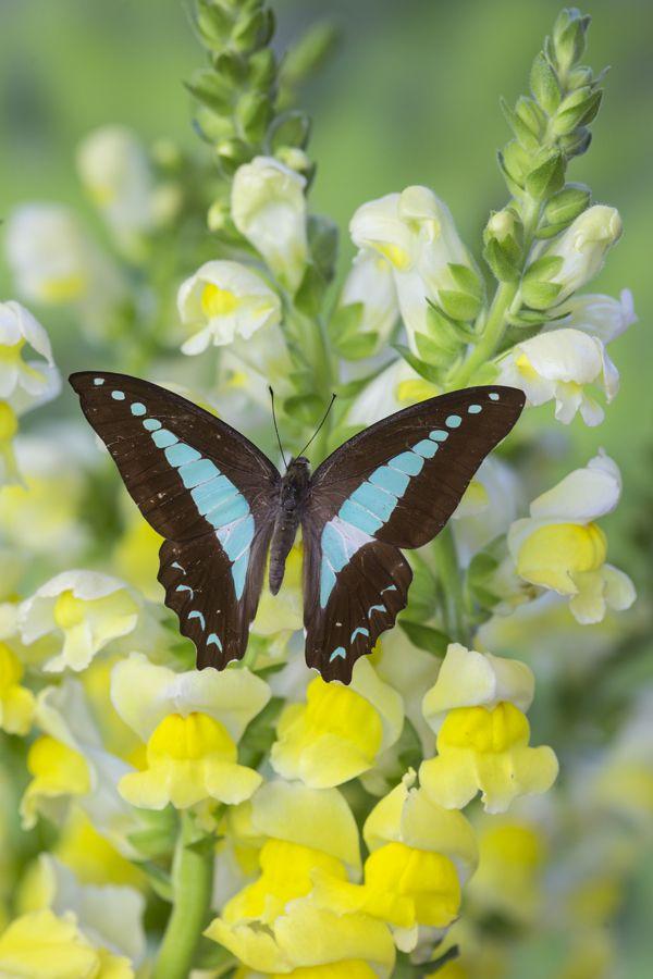 Schmetterling Von Babara Bakayoko Auf Tierfotos Insekten Tier Fotos
