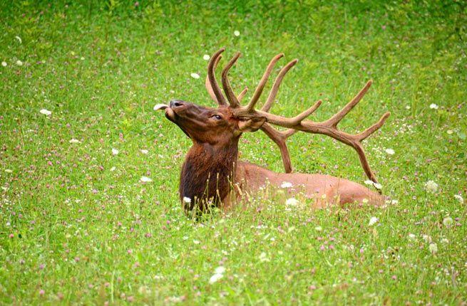 10 Best Safaris in the U.S.