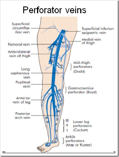 Great saphenous vein anatomy