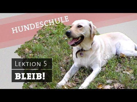 BLEIB - Hund Befehl bleib beibringen, bleiben, warten Befehl Hundetraining Platz Sitz - YouTube