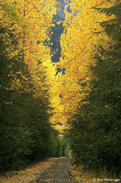 Kenai Peninsula, Alaska: Alaskan Adventure, Alaska Beautiful, Adventure Alaska, Alaska Dreams, Kenai Peninsula 160, Fall Kenai, Trail Paths Roads, Trails Paths Roads, Dreams Places Alaska