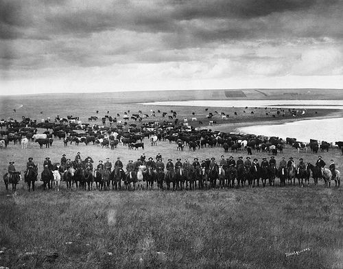 Last Bow River Ranche cattle round-up, near Cochrane, Alberta. Date: [ca 1905-1906] Photographer/Illustrator: Montgomery, W.F.