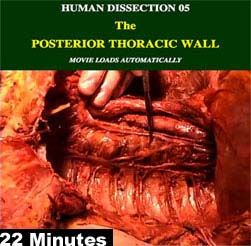 CADAVER DISSECTION VIDEOS the posterior thoracic wall