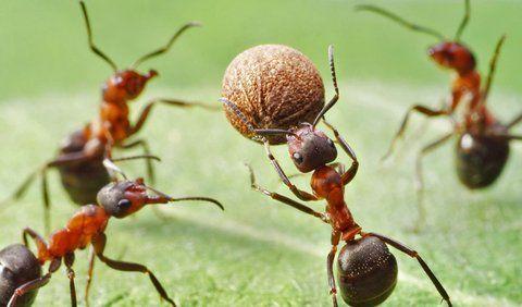 Aj vás vytáčajú mravce v domácnosti? 9 najlepších babských rád, ako sa ich šikovne zbaviť
