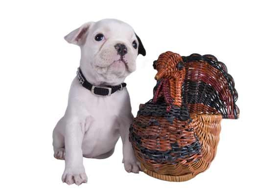 Top Ten Tips for Feeding Pets Thanksgiving Leftovers | petMD