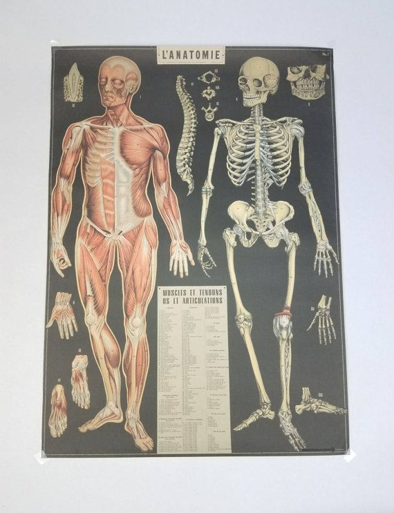 Medical Poster French Poster Art Poster Anatomy Poster