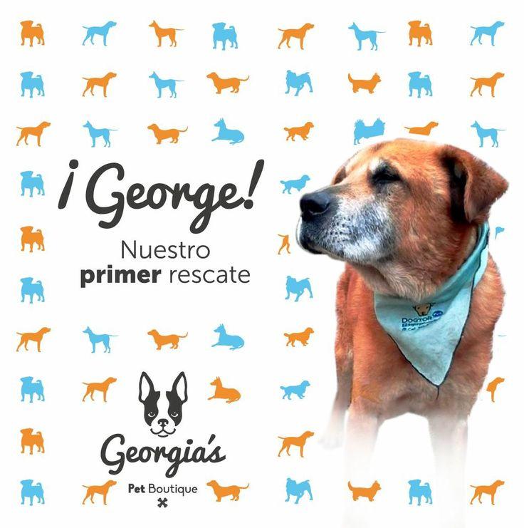 ¡George! El primer rescate de  Georgia's Pet Boutique