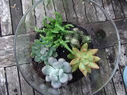 DIY Succulent Terrariums