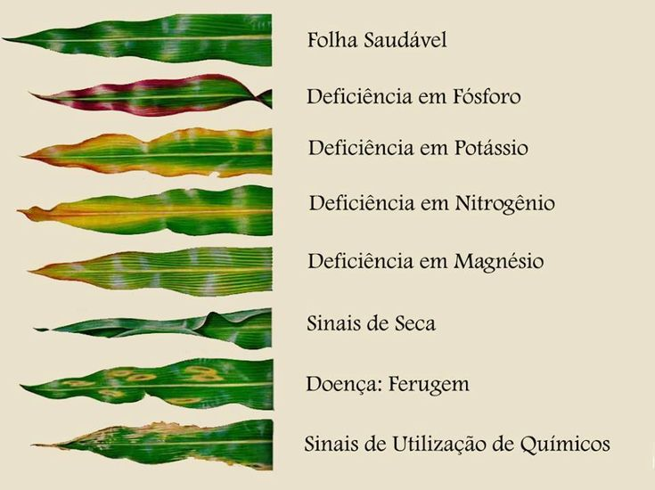 "A ""linguagem"" das plantas :: Guia visual de deficiência de nutrientes. Fonte: https://www.facebook.com/tudosobreplantas/?fref=photo"