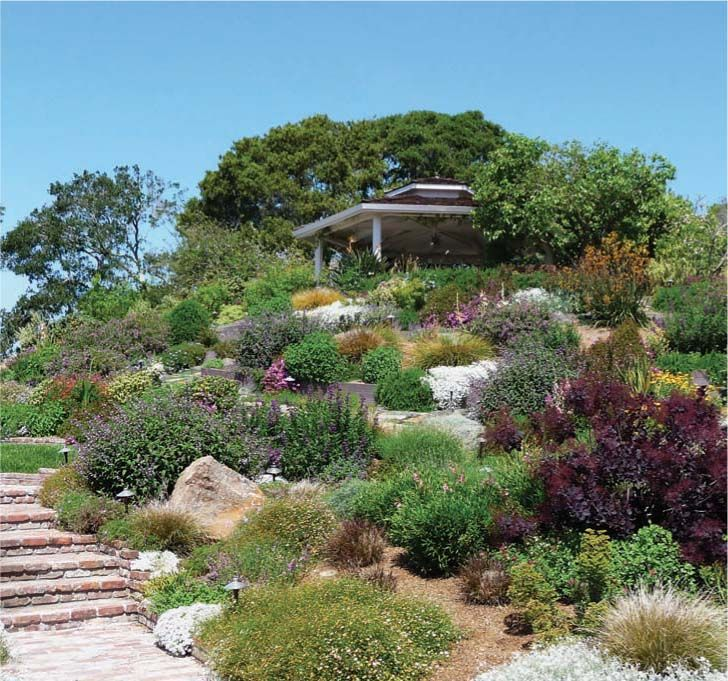 25 best ideas about california native garden on pinterest california native plants for Gardens in southern california