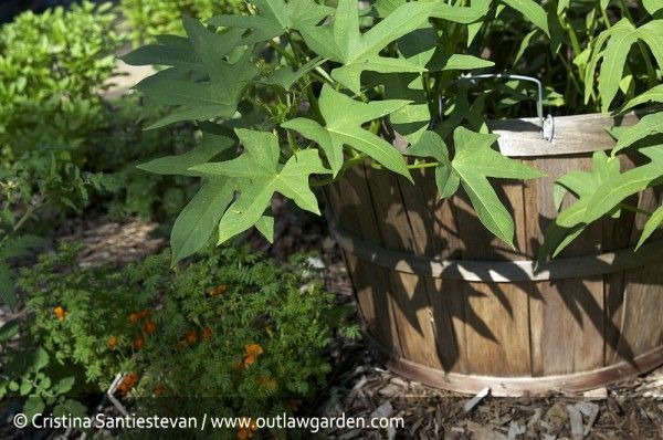 10 rules for growing vegetables in the front yard without the annoyance of your …