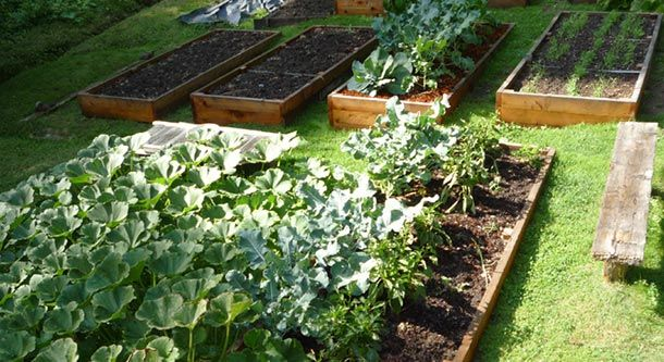 Know Your Garden Soil: How to Make the Most of Your Soil Type | Eartheasy Blog
