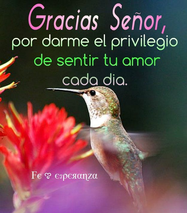 Gracias Senor Por Darme El Privilegio De Sentir Tu Amor Cada Dia