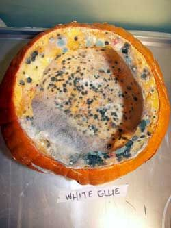 How to Preserve a Halloween Pumpkin - Keep a Jack O' Lantern Fresh - THIS WAS DONE AS A SCIENCE EXPERIMENT, they tested all the the pumpkin preservation techniquesyou find on pinterest