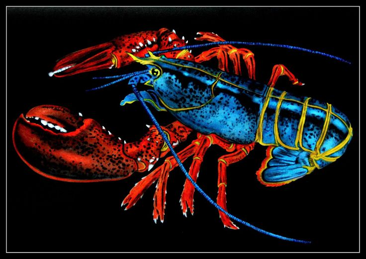 Maine Lobster By Trevor Grant