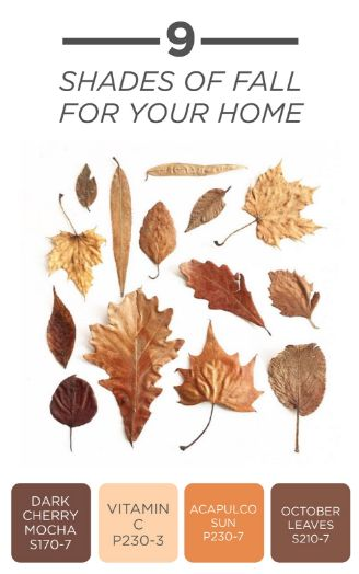 Let the crisp fall leaves inspire the colors in your home.This color combination of Dark Cherry Mocha, Vitamin C, Acapulco Sun, and October Leaves is the perfect palette for all of your fall DIY projects and home decor ideas. Click to see how you can celebrate the season with these bold autumn hues!