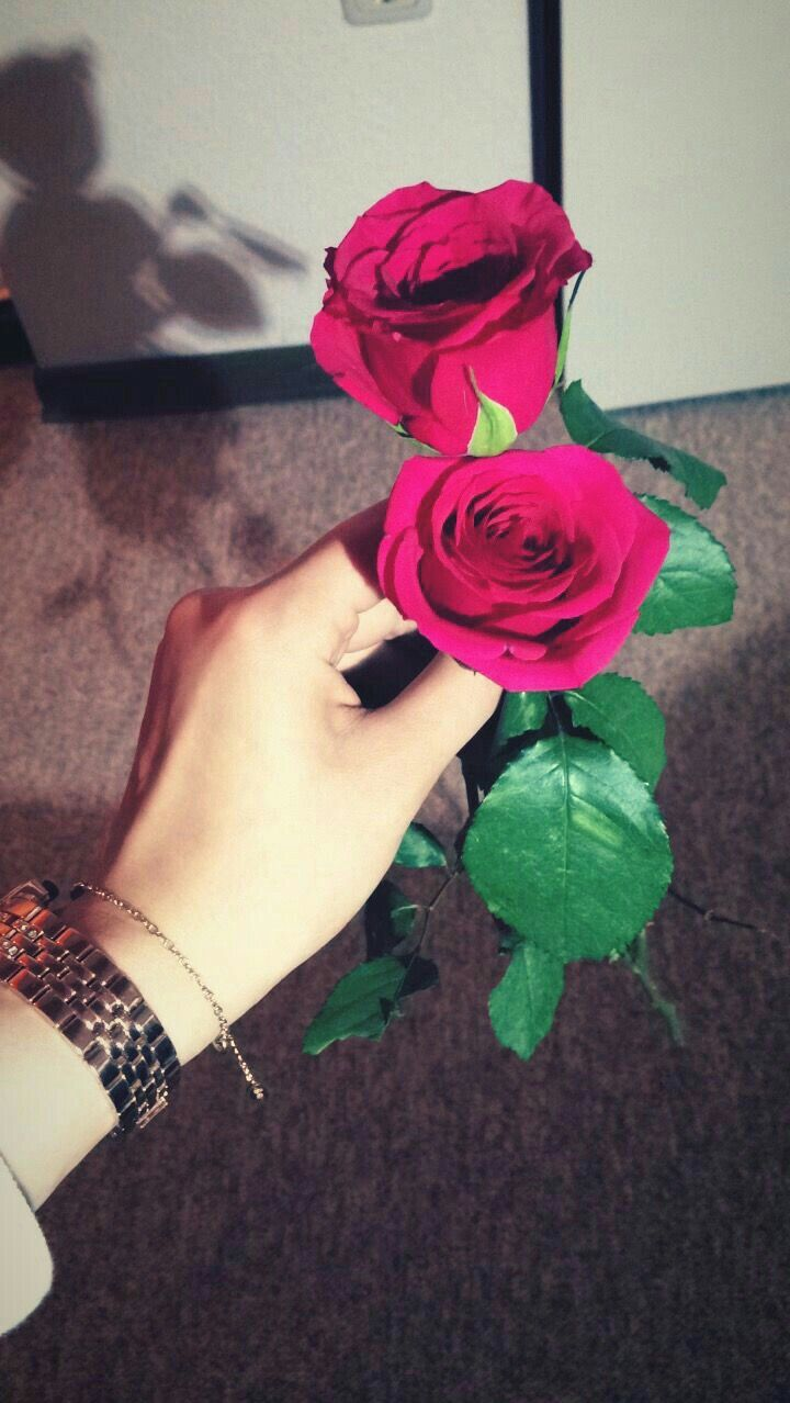 Pin By Decent Princess On Flowers Red Rose Tumblr Beautiful Flowers Photography Posing Guide