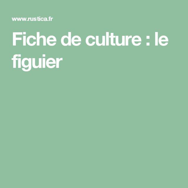 Fiche de culture : le figuier