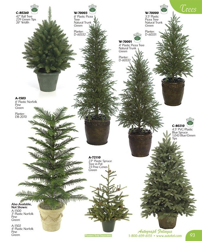 1000 images about evergreen trees and landscaping on for Small decorative evergreen trees