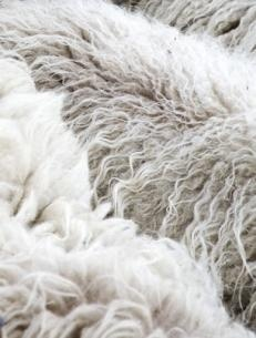 Claudy Jongstra keeps the entire process from raw materials to end product in her own hands, so that she can operate independently and to be able to work sustainable. Jongstra tends her own flock of rare Drenthe Heath sheep :)