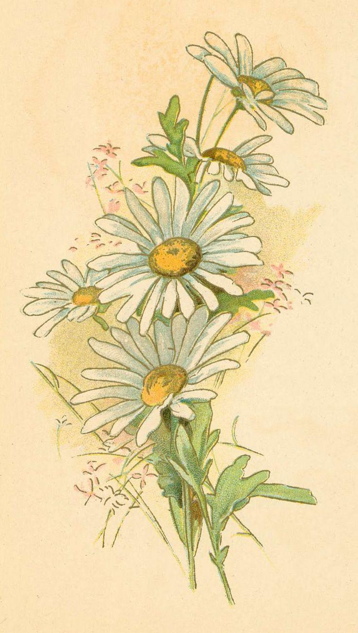 Vintage daisy may 1 n15 9