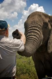 The Elephant Whisperer Died, and his elephants came from miles away to pay homage to this wonderful man.